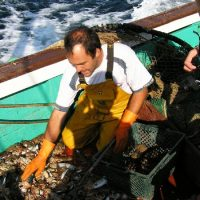 Le tri de la pêche